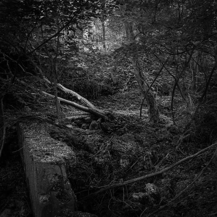 Forêt, 1 siècle après la première guerre mondiale, Bouxières sous Froidmont